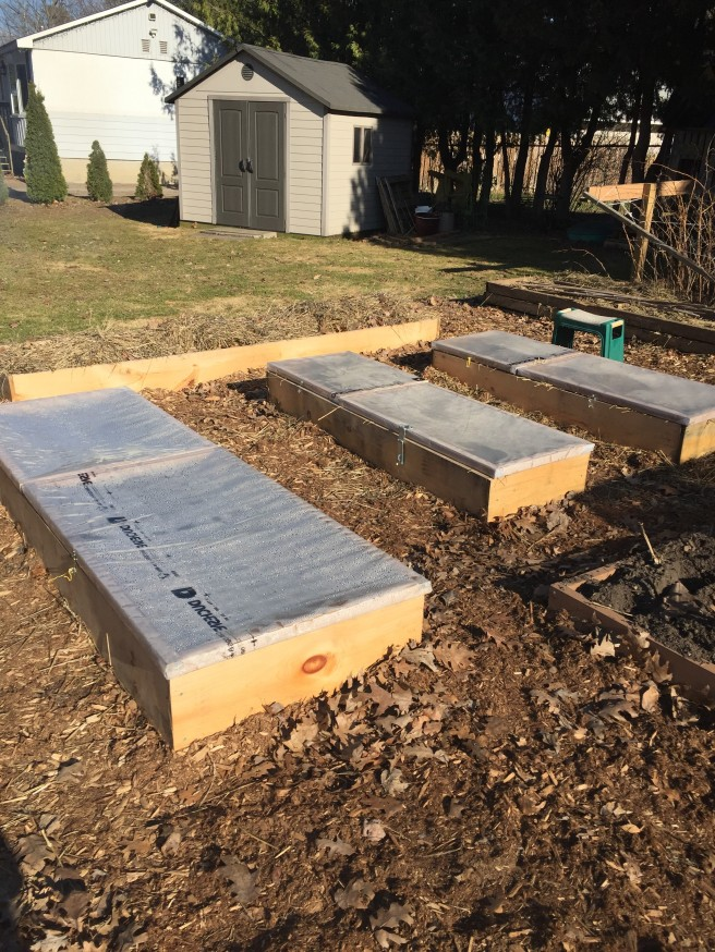 Yvonne Haug's Garden cold frames to prolong season.