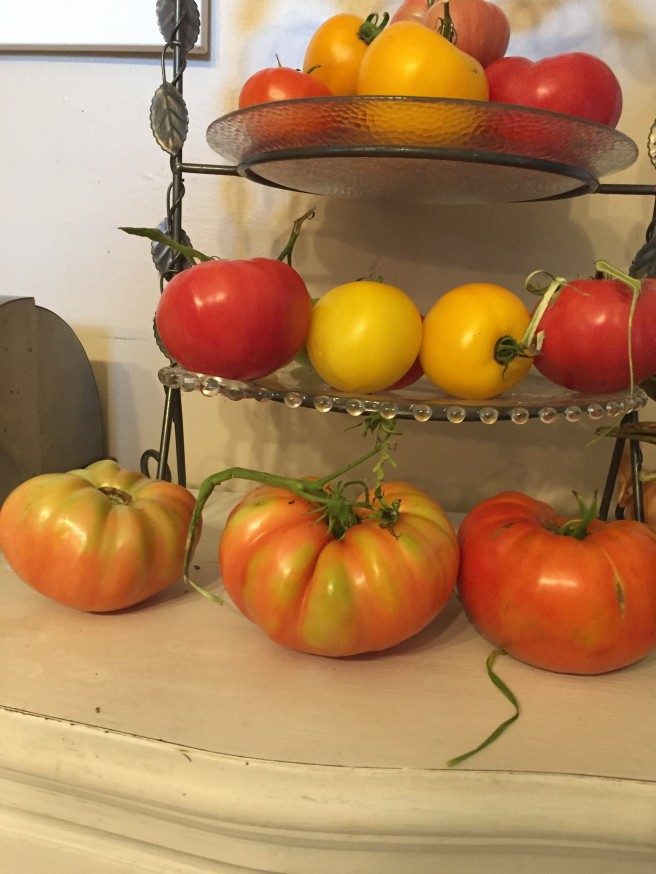 Yvonne Haug's Greenhouse plants Tier of tomatoes